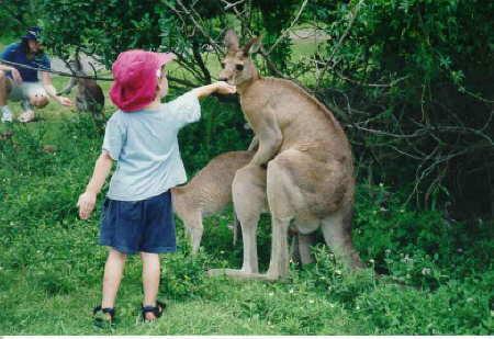 Un bambino troppo curioso o due canguri troppo focosi ?