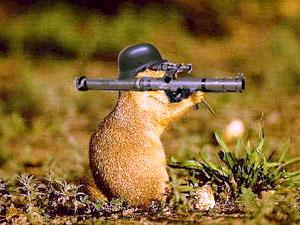 Attenti a questo scoiattolo