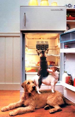 Quando l'unione fa la forza, Cani e gatti uniti per svaligiare il frigo