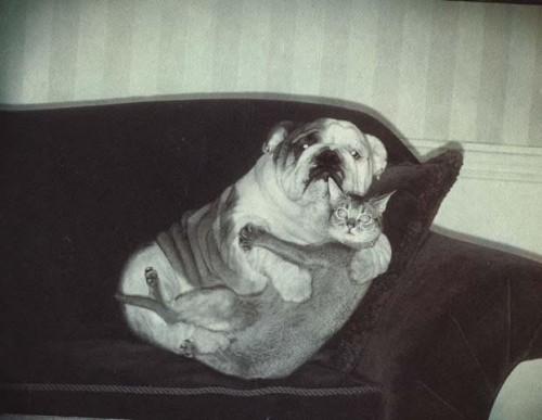 Ci vogliamo tanto bene. L'amore tra cane e gatto si può