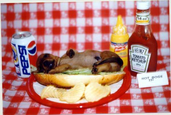 il vero Hotdog