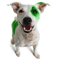 Cucciolo fosforescente o extraterrestre ??