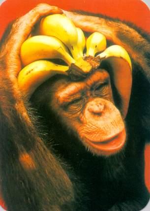 Ti piace la mia cconciatura? Scimmia e banane
