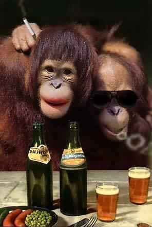 Veramente une bella coppia di scimmie