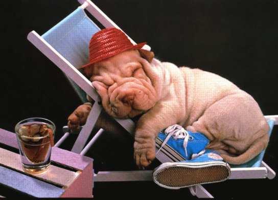 Sono troppo stanco. Lasciatemi riposare un cucciolo pigro