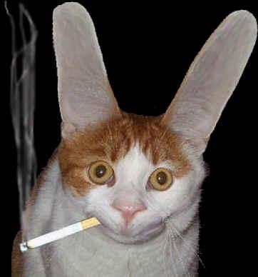 Un coniglio dallo sguardo ipnotico