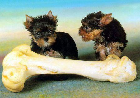 La felicità dei cuccioli…Un osso gigante