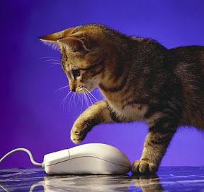 Gatto e mouse …questi sconosciuti
