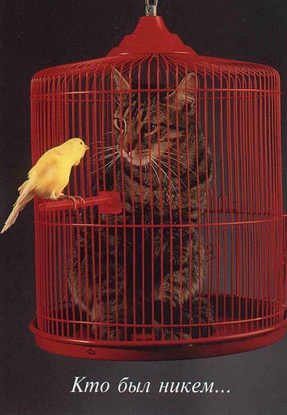 Gatto in gabbia e canarino fuori
