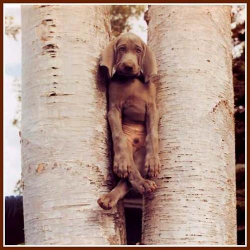 Cagnolino incastrato tra due alberi