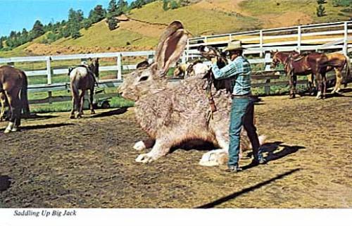Questo non è un coniglio è un cavallo ;-)