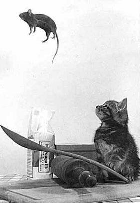 Ti acchiappo. Gatto e topolino