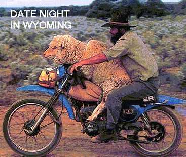 Un passaggio in moto per la mia pecora