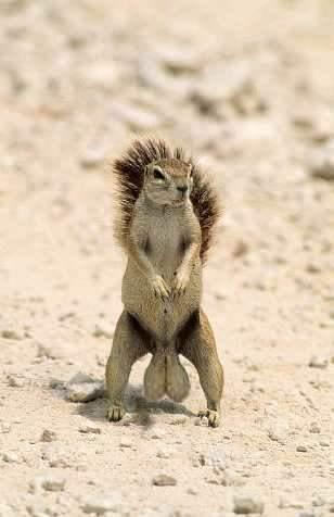Quando si dice … Uno scoiattolo con le noci