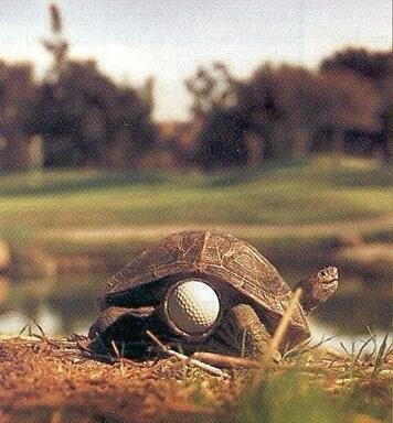 Attenzione alle palle da golf. Questa tartaruga ne sa qualcosa