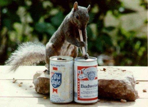 A questo scoiattolo piace la birra