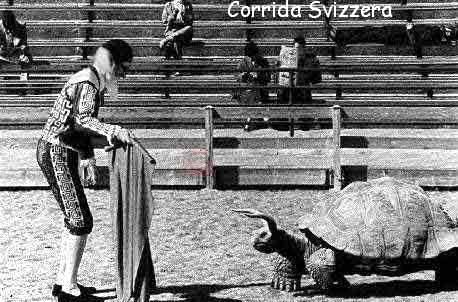 Tartaruga e corrida