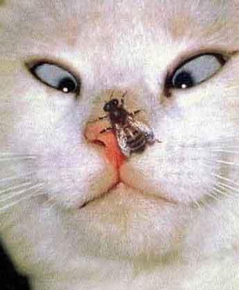 Gatto e mosca