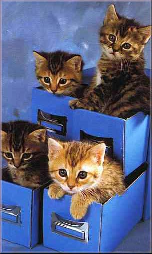 Mettiamo in ordine questi gattini