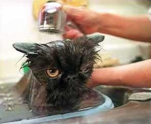 Ai gatti non piace fare il bagno