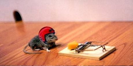 C'è la farà il nostro topolino?