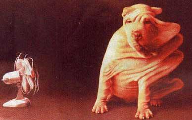 Il ventolatore forse è troppo veloce per questo cane