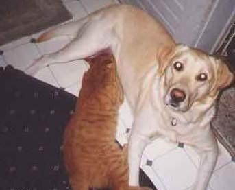 Che tenerezza un cane che allatta un gatto