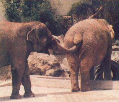 Elefanti sporcaccioni