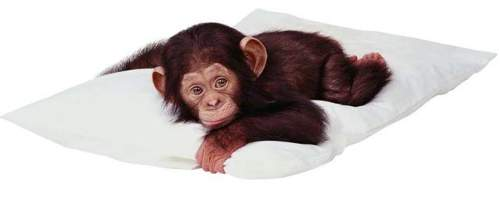 Che tenerezza questa scimmietta