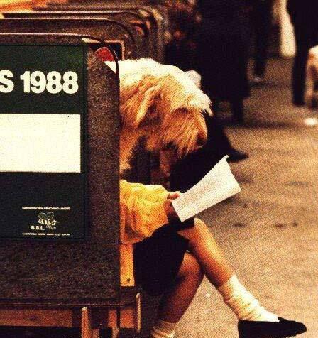Opss … questo cane sembra molto interessato alla lettura