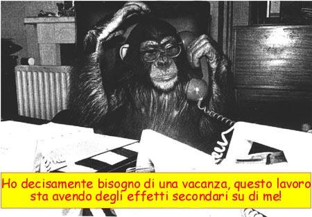 Scimmia al lavoro