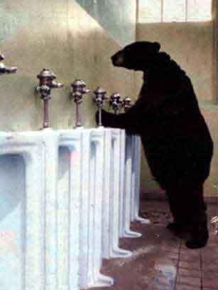 Un orso in cerca di un lavandino