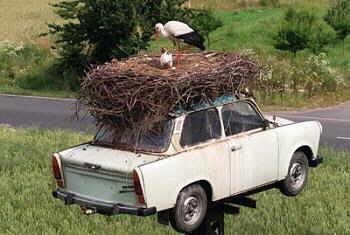 Una vecchia auto usata come nido dalla cicogna