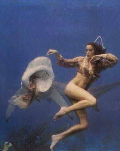 Attenta allo squalo . Ti strappa i vestiti