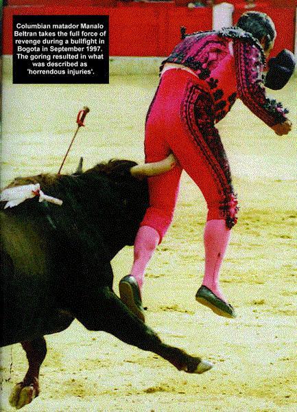 Torrero incornato dal toro durante la corrida