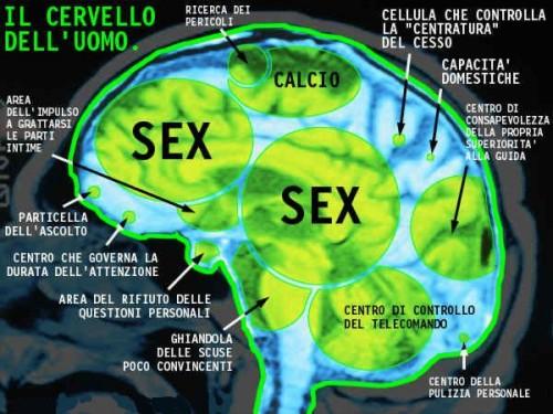 Il cervello dell'uomo. Semplie e funzionale