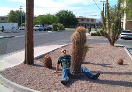 Attenzione potreste pungervi al cactus